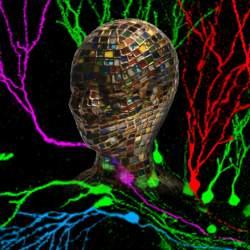 head & neurons[3]